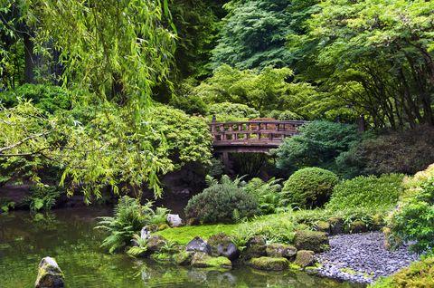 Vegetation, Natural landscape, Landscape, Pond, Garden, Shrub, Watercourse, Bank, Groundcover, Wetland,