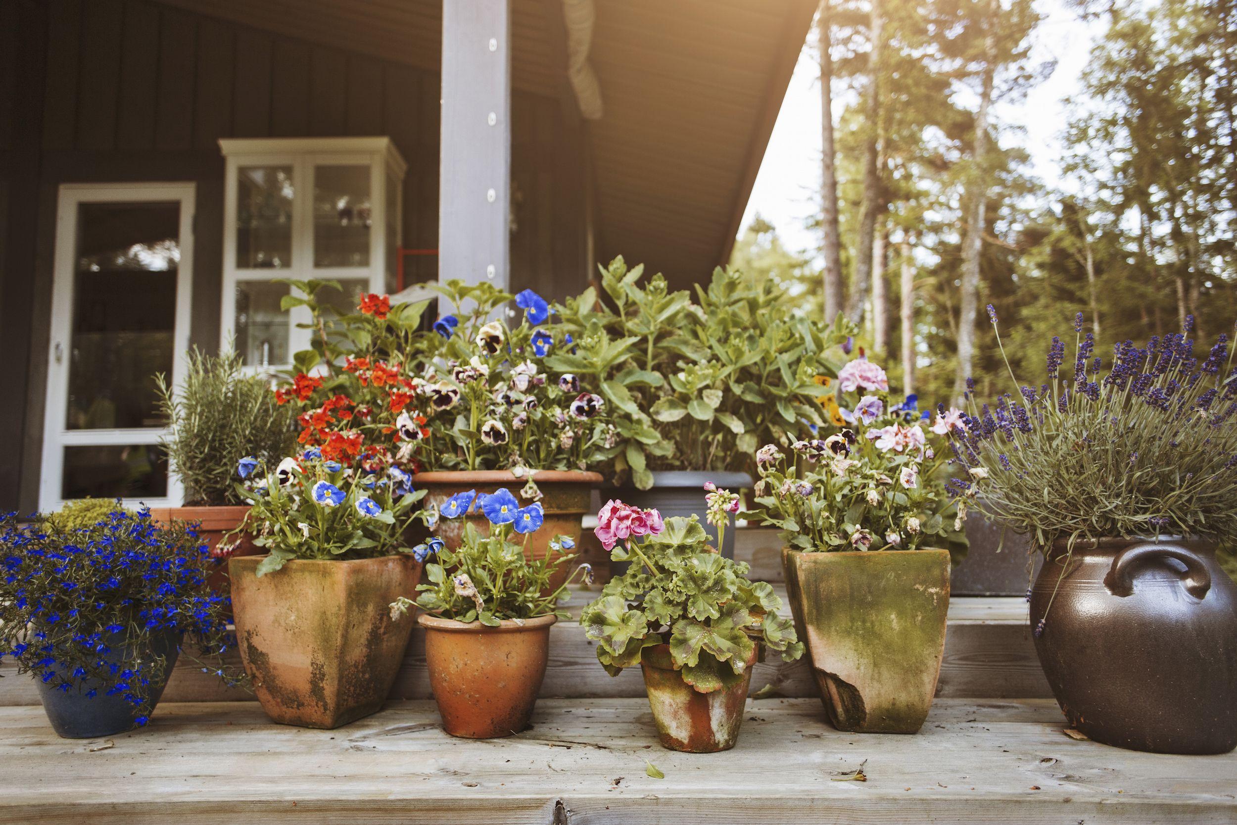 17 Low Maintenance Landscaping Ideas – Easy Backyard Landscape ...