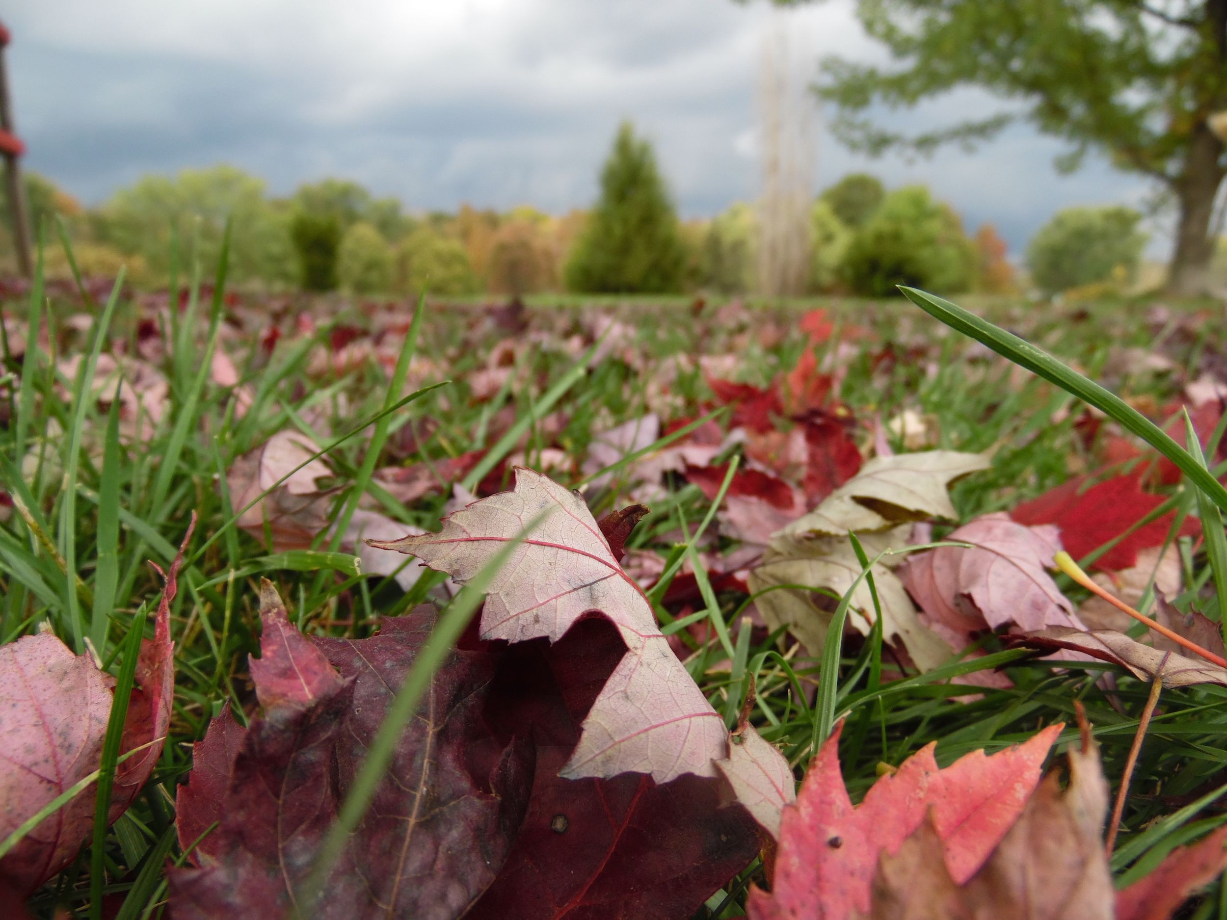 17 Low Maintenance Landscaping Ideas Easy Backyard Landscape