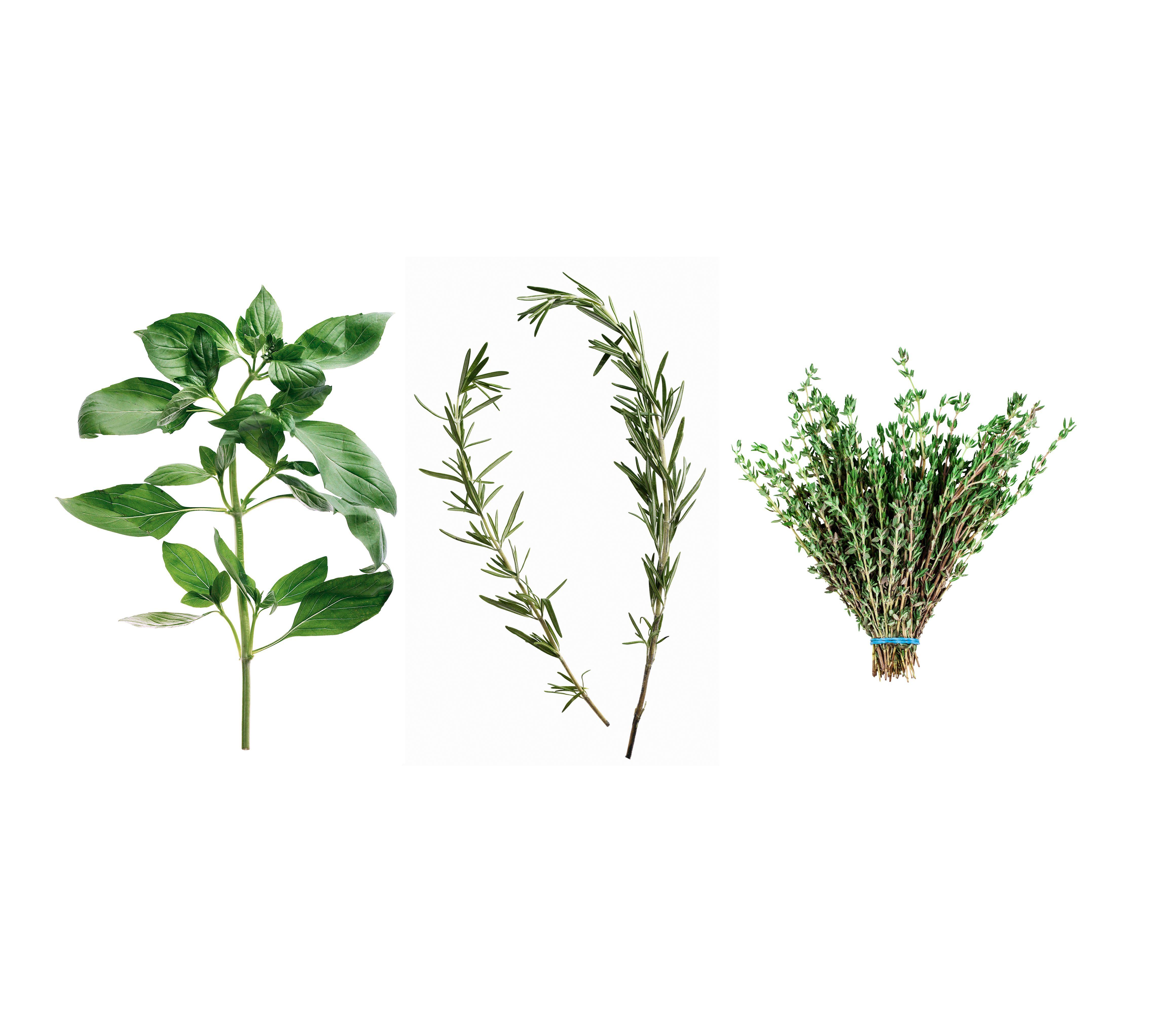Basin indoor gardening 5 best hydroponics kits to grow your indoor basin indoor gardening indoor herb garden ideas how to make a kitchen herb garden workwithnaturefo