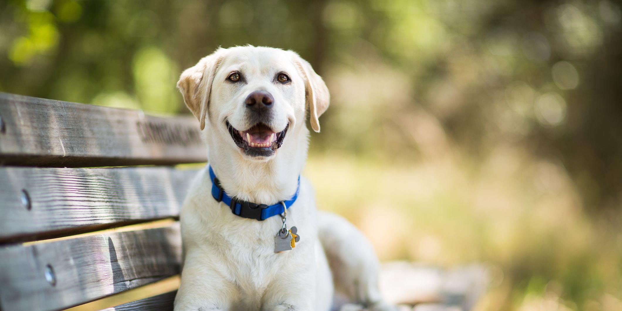15 Best Dog Breeds For Travelers