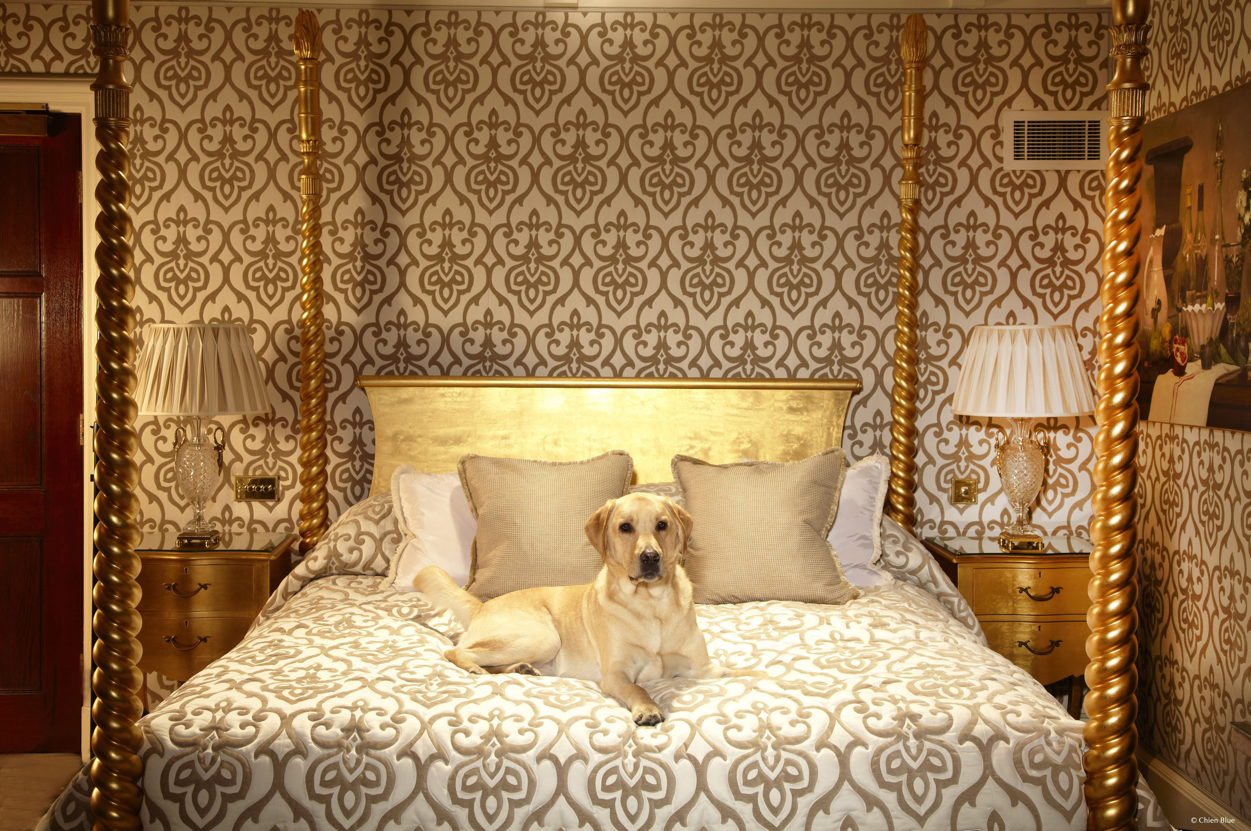 12 Pet-Friendly Hotels With Luxury Pet Accommodations