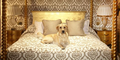 12 Pet Friendly Hotels With Luxury Accommodations Vacation