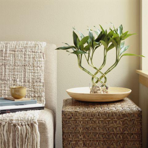 15 Best Indoor Plants For Apartments - Low-Maintenance ...