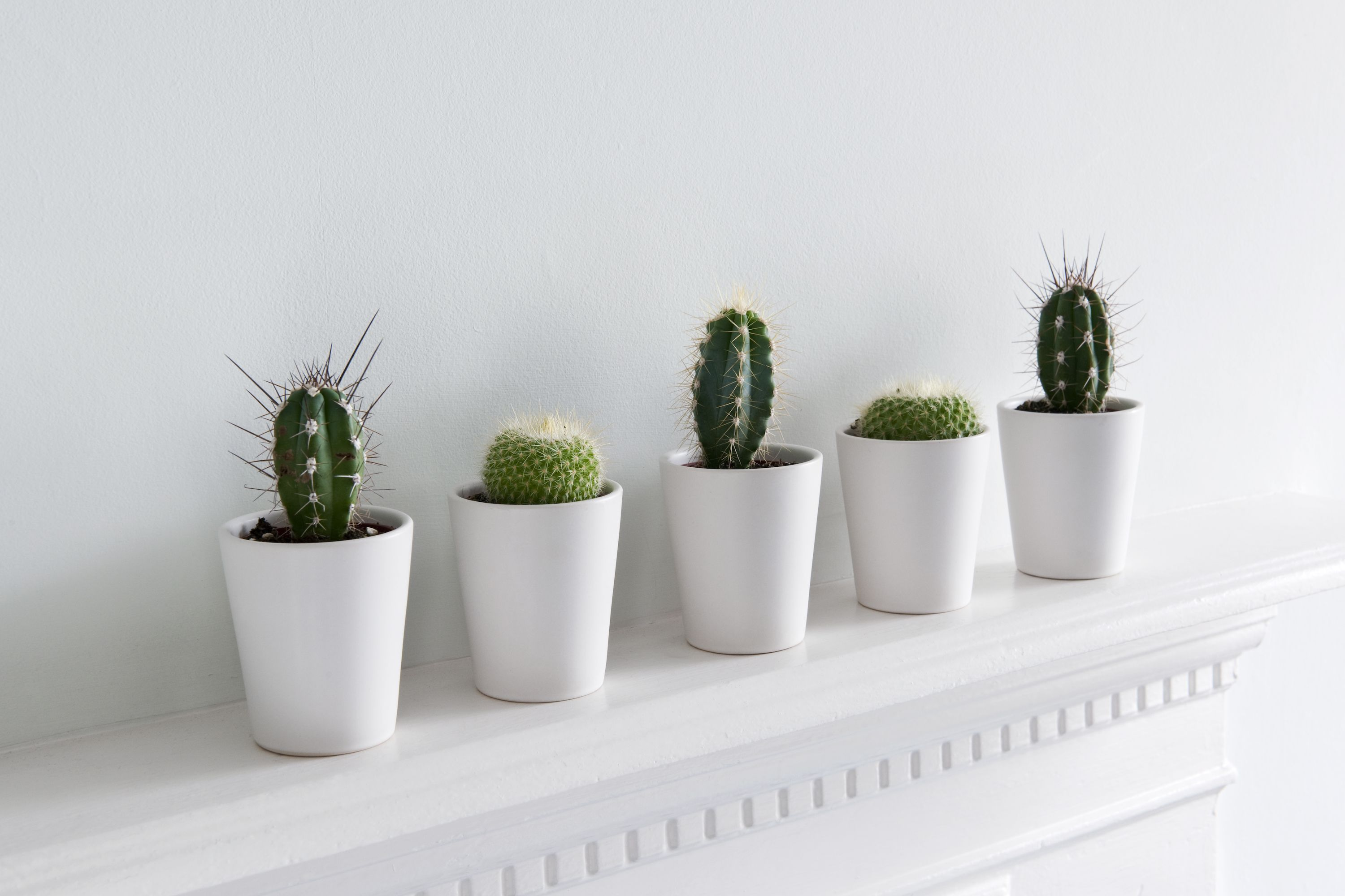 10 Best Indoor Plants For Apartments - Low-Maintenance Plants For ...