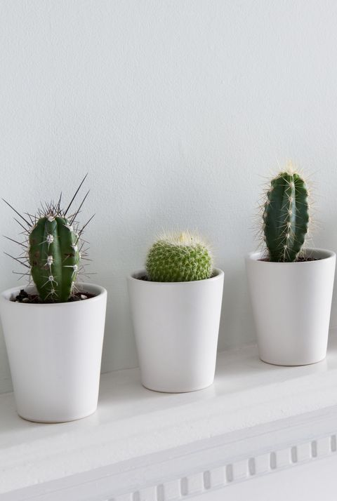 30 Best Indoor Plants For Apartments