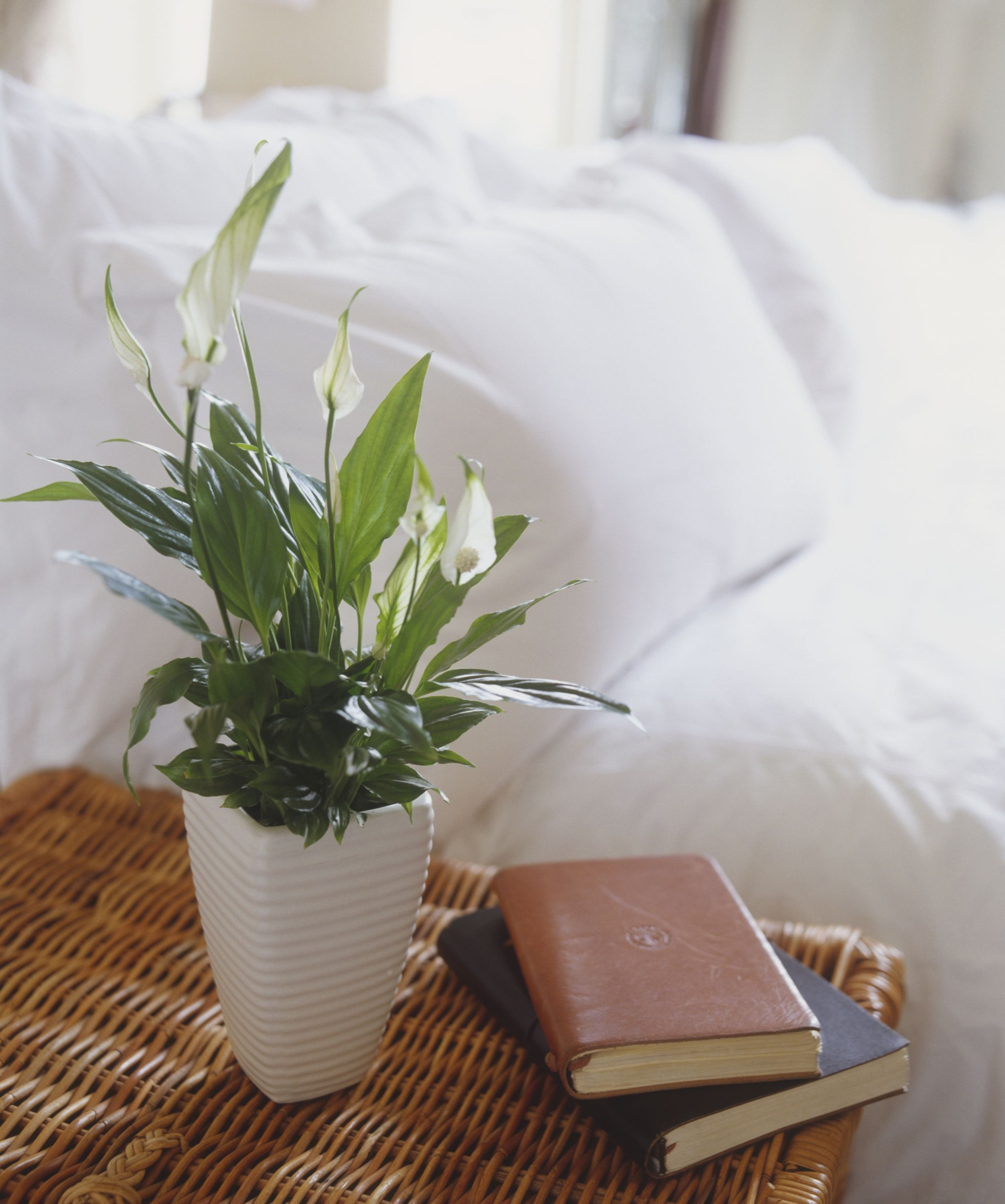 10 Best Indoor Plants For Apartments