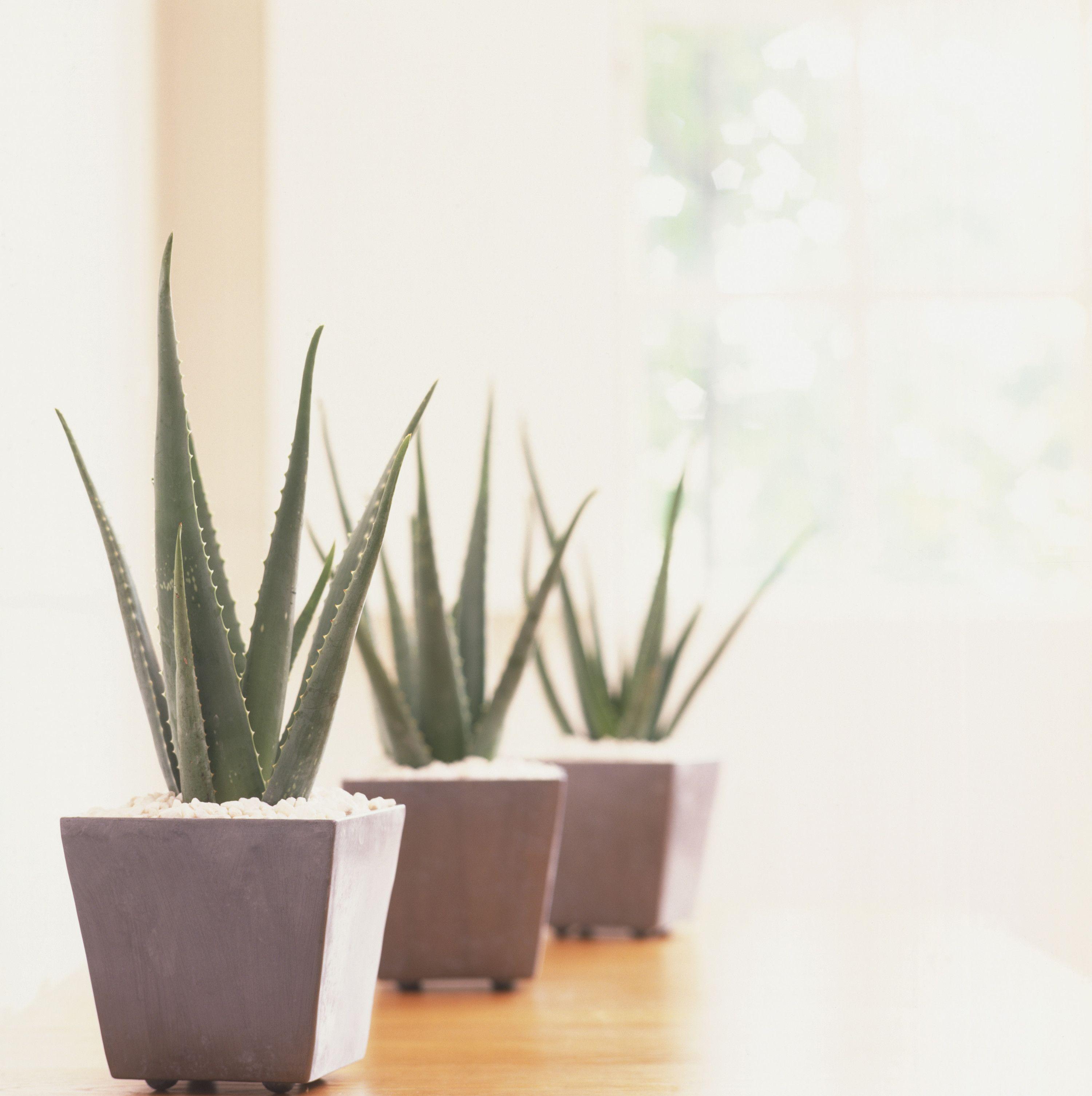 25 Best Indoor Plants For Apartments - Low-Maintenance