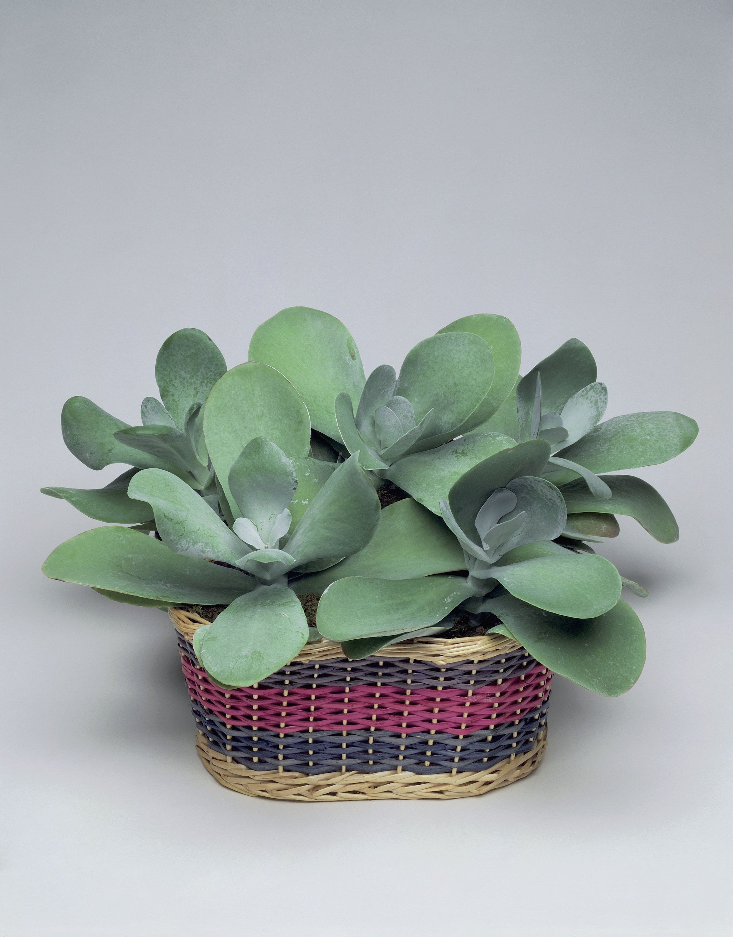 25 Best Indoor Plants For Apartments - Low-Maintenance ... Ze Plant At Home Depot on plants with white flowers, plants at ikea, plants at kroger, plants at tj maxx, plants under evergreen trees, plants at kmart, plants at harris teeter, plants at publix, plants at sam's club, plants that repel bugs and pests, plants at homegoods, plants that repel mosquitoes, plants inside home, plants at safeway, plants at disney, plants at michaels, plants at office depot, vines depot, plants at cvs, plants at menards,