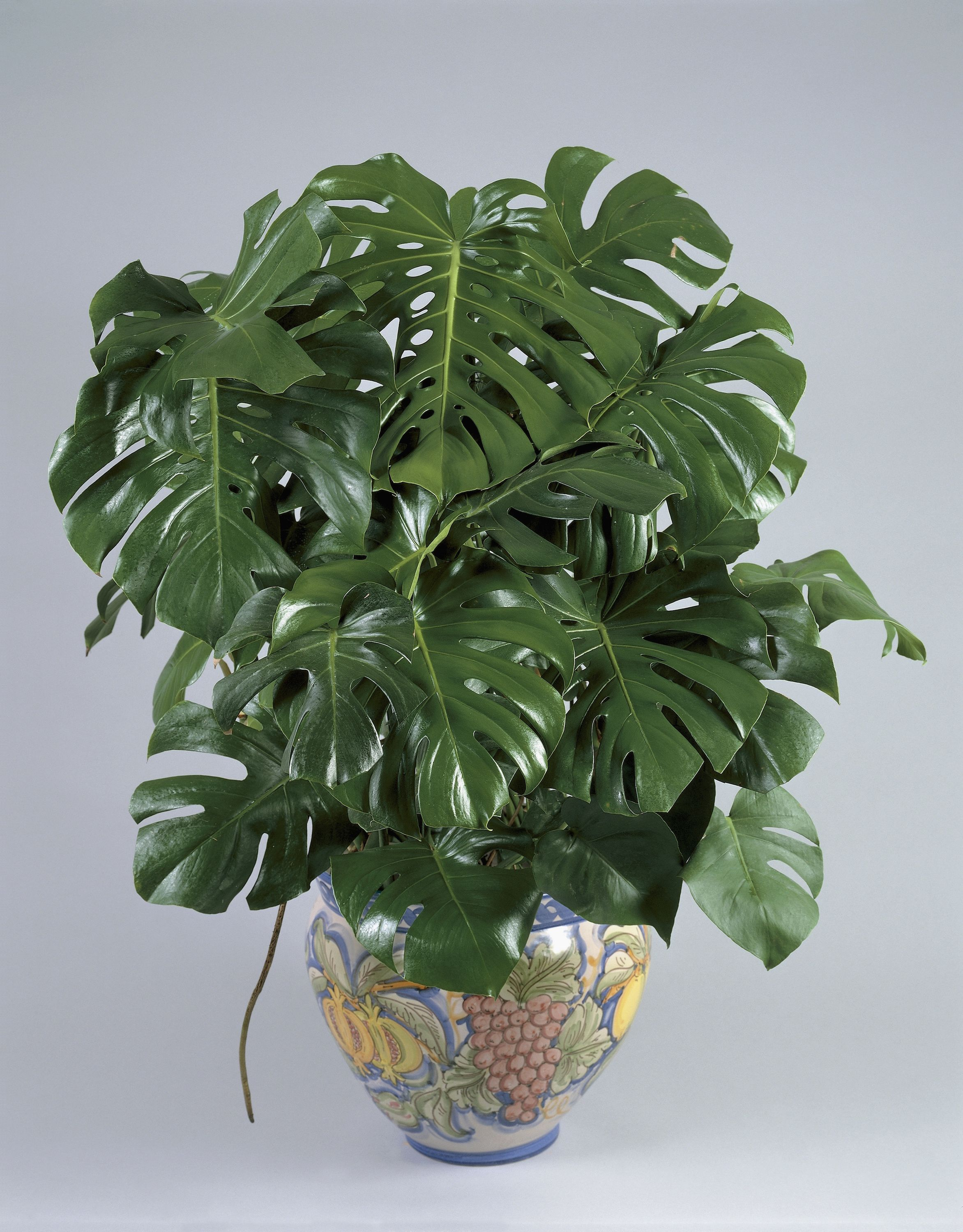10 Best Indoor Plants For Apartments Low Maintenance City Dwellers