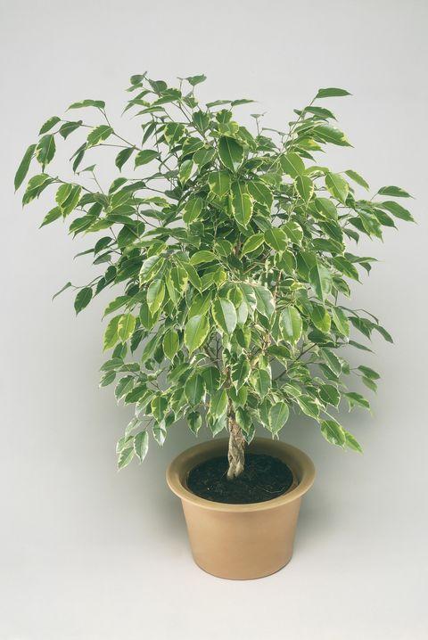 30 Best Indoor Plants for Apartments - Best Houseplants ...