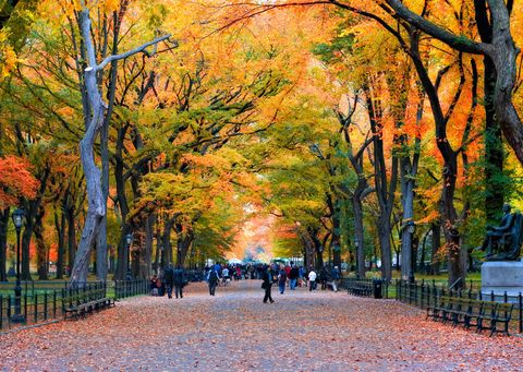 Deciduous, Nature, Branch, Leaf, Tree, Autumn, People in nature, Orange, Woody plant, Tints and shades,