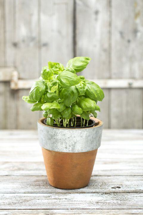 Flowerpot, Leaf, Ingredient, Herb, Houseplant, Annual plant, Interior design, Pottery, Plant stem, Perennial plant,