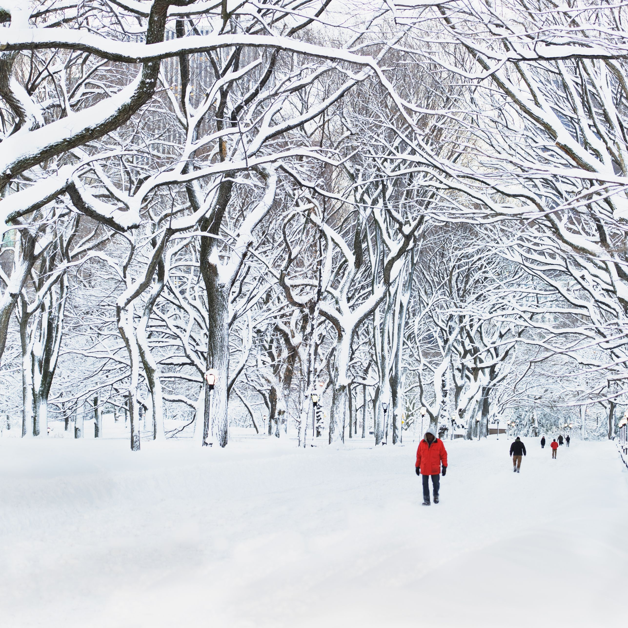 <p>Away from the hustle and bustle of the Macy's holiday windows, Manhattan's famed Central Park becomes a winter wonderland under a thick coat of powdery snow.</p>
