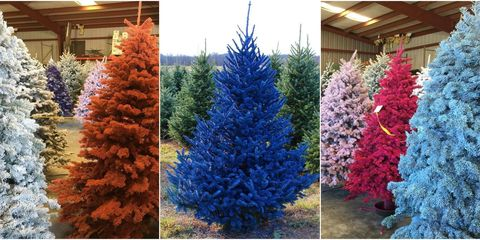 if you want a colorful but still real christmas tree youre in luck this year some farms have started selling real pine trees that have been showered - Colorful Christmas Trees