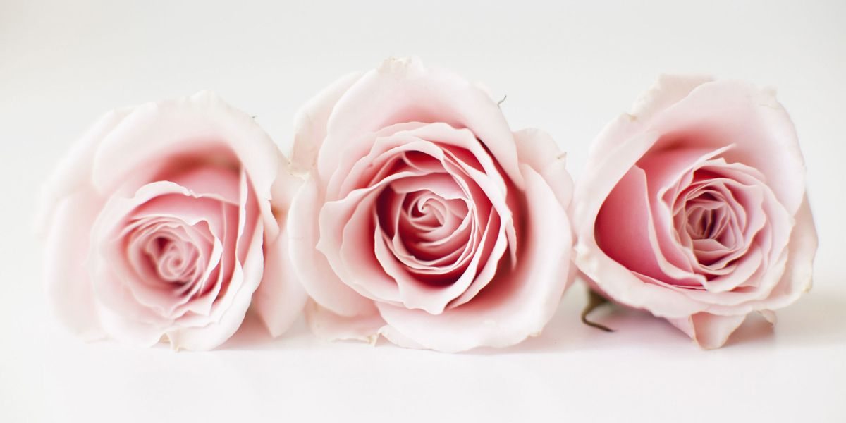 10 rose color meaning explanations meaning of rose colors mightylinksfo