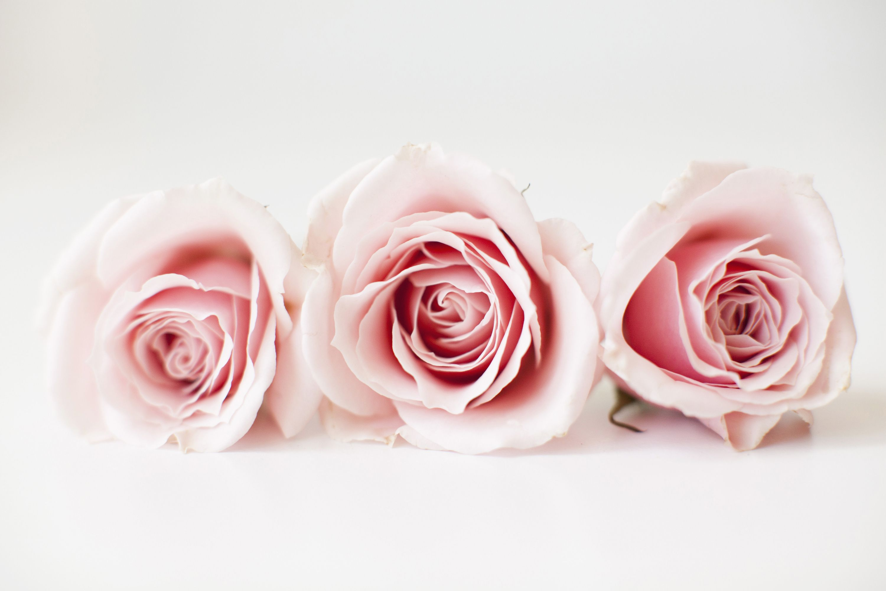 10 Rose Color Meaning Explanations Meaning Of Rose Colors