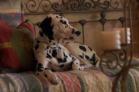 10 Best Dog Boarding Locations In The United States - Luxury Pet Hotels