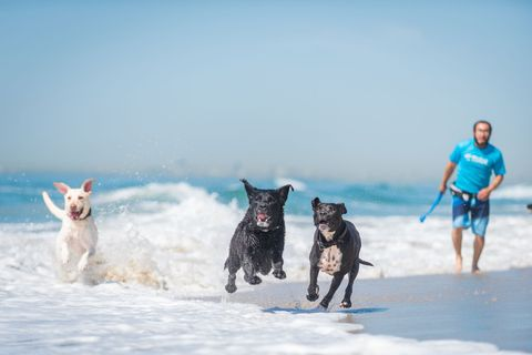10 Best Dog Boarding Locations In The United States - Luxury