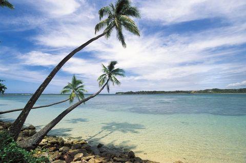 Body of water, Sky, Coastal and oceanic landforms, Cloud, Shore, Tree, Coast, Woody plant, Horizon, Ocean,