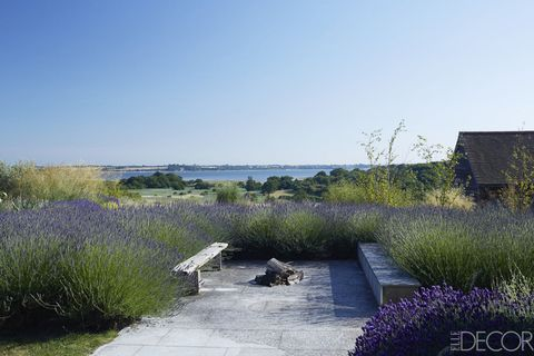 Plant, Natural landscape, Shrub, Plant community, Lavender, Purple, Groundcover, Grass family, Garden, Flowering plant,