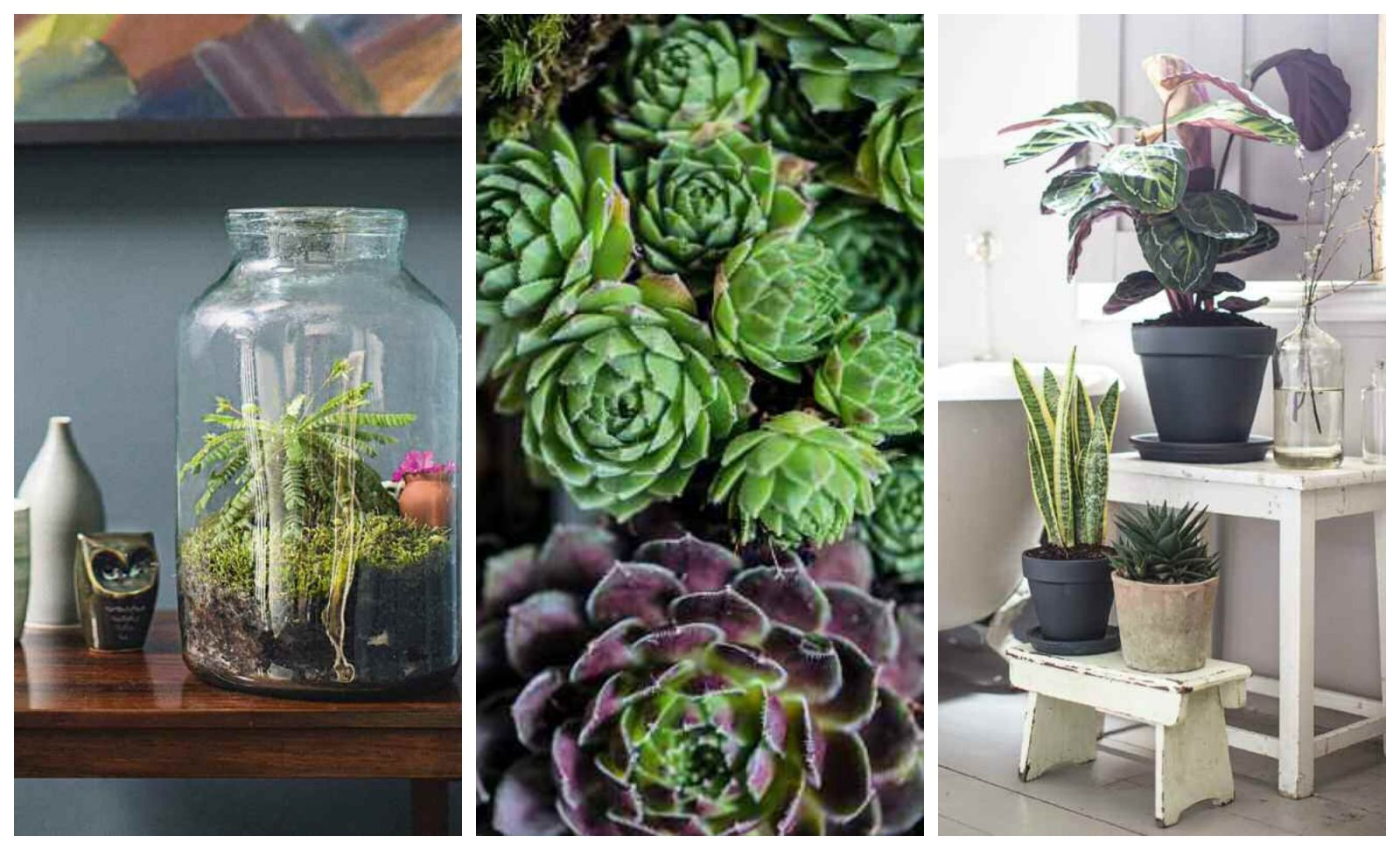 The Top 10 Indoor Gardening Tips