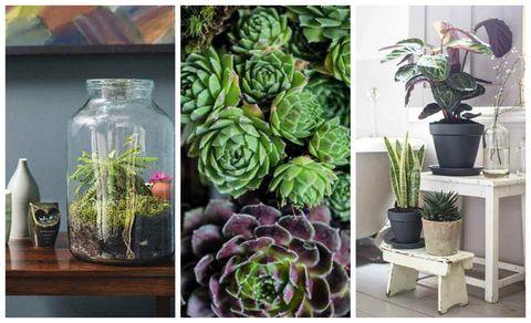 Flowerpot, Flower, Purple, Flowering plant, Interior design, Terrestrial plant, Houseplant, Lavender, Annual plant, Produce,