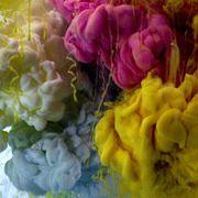 Petal, Flower, Pink, Colorfulness, Purple, Botany, Flowering plant, Magenta, Rose order, Floristry,