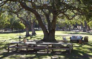 Nature, Wood, Public space, Outdoor furniture, Park, Woody plant, Land lot, Shade, Trunk, Outdoor table,
