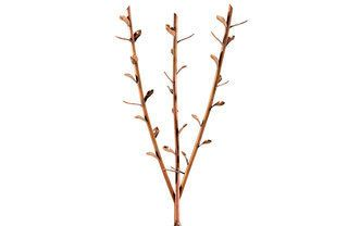 Branch, Brown, Twig, White, Leaf, Botany, Beige, Plant stem, Drawing,