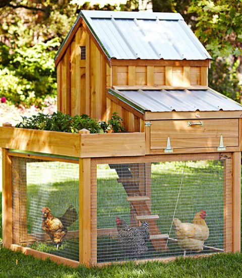 Wood, Bird, Vertebrate, Phasianidae, Galliformes, Pet supply, Fowl, Chicken, Cage, Beak,