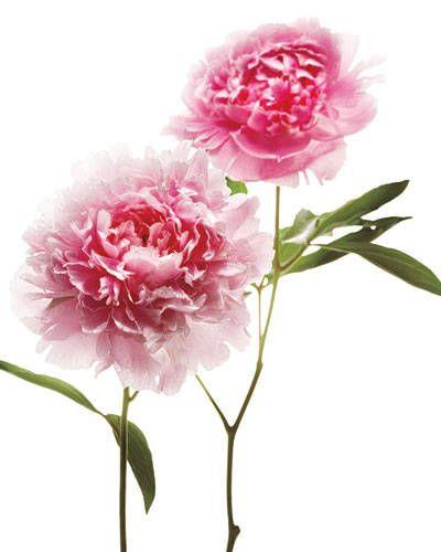 2. Seasonal Flowers