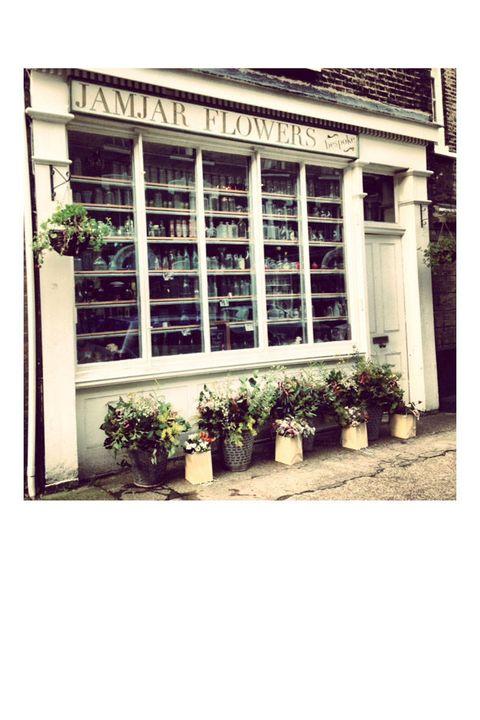 Flowerpot, Shrub, Fixture, Houseplant, Rectangle, Annual plant, Daylighting,