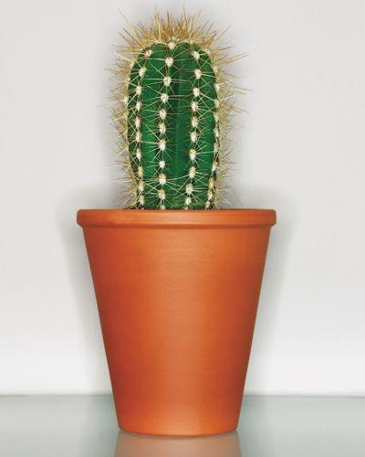 Flowerpot, Orange, Terrestrial plant, Flowering plant, Houseplant, Peach, Thorns, spines, and prickles, Cactus, San Pedro cactus, Caryophyllales,