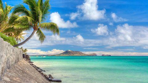 Body of water, Coastal and oceanic landforms, Sky, Cloud, Coast, Ocean, Aqua, Turquoise, Shore, Woody plant,