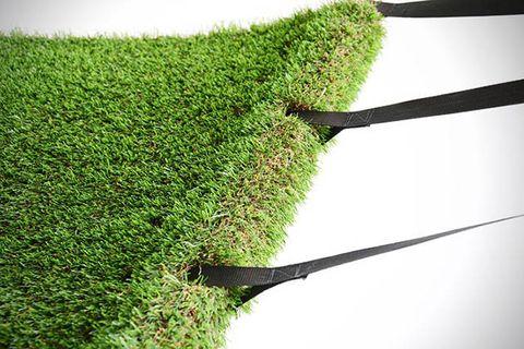 Green, Grass, Line, Botany, Grass family, Shrub, Terrestrial plant, Hedge, Shadow, Plant stem,
