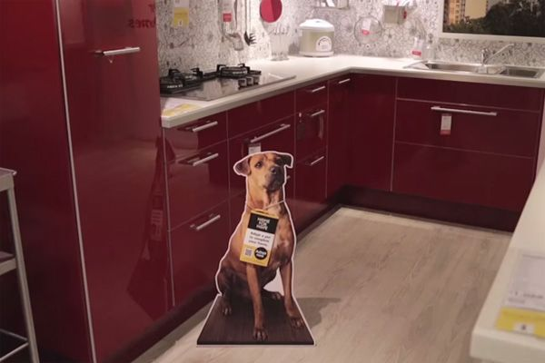 How IKEA's Helping Shelter Dogs Find Homes