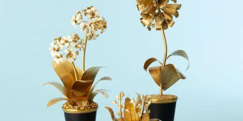 Flowerpot, Yellow, Flower, Flowering plant, Botany, Petal, Interior design, Terrestrial plant, Plant stem, Houseplant,