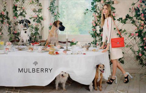 Dog breed, Dog, Vertebrate, Carnivore, Mammal, Sporting Group, Tablecloth, Holiday, Interior design, Christmas decoration,