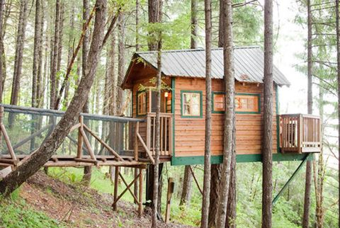 Wood, Tree, Woody plant, Rural area, Nature reserve, Forest, Tree house, Trunk, Human settlement, Log cabin,