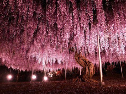 Night, Pink, Magenta, Tints and shades, Purple, Midnight,