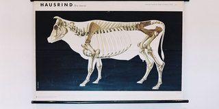 Organism, Photograph, Wall, White, Room, Working animal, Pack animal, Living room, Rectangle, Modern art,