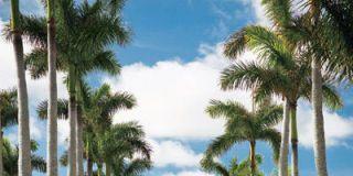 ELLE DECOR Goes to Palm Beach