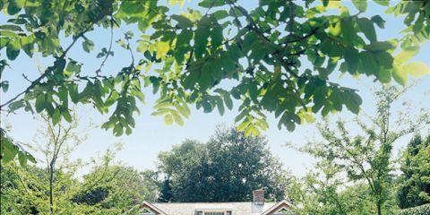 Deborah Nevins's Garden Secrets