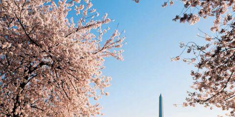 ELLE DECOR Goes to Washington, D.C.