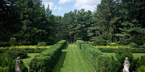 Plant, Shrub, Garden, Hedge, Botany, Evergreen, Park, Plantation, Groundcover, Botanical garden,