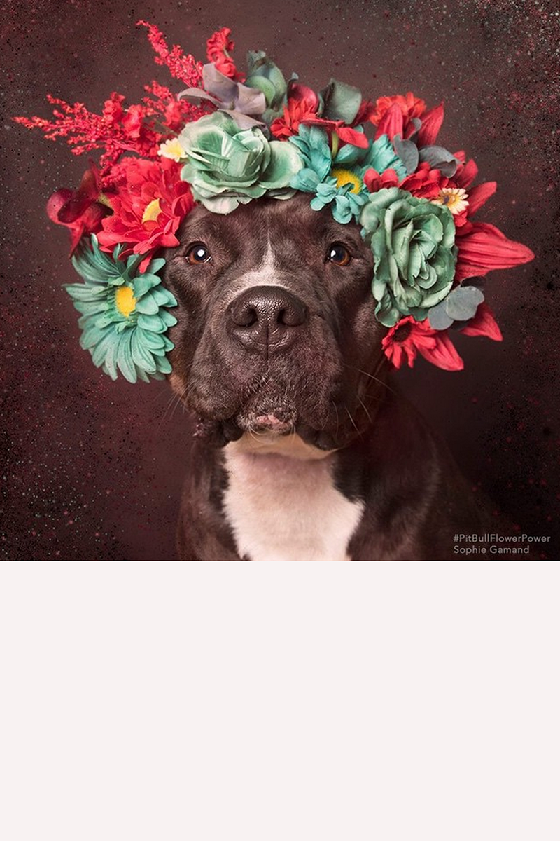 """Miss Molly works mint green and red. """"Shoots can take one minute, or thirty minutes,"""" says the photographer. """"It completely depends on the dog."""" Gamand makes a unique flower crown for each pup.  <div><a target=""""_blank"""" href=""""https://instagram.com/p/zaF90bkPQp/"""">@sophiegamand</a> </div>"""