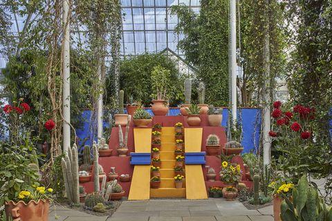 Plant, Garden, Shrub, Majorelle blue, Flowerpot, Stairs, Park, Annual plant, Nonbuilding structure, Landscaping,