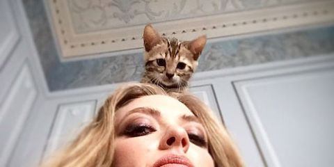 36 Adorable Photos of Celebrities and Kittens