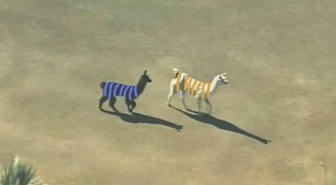 """<p>In the greatest two-week period the internet has ever known, two llamas in Phoenix made a run for it and a truly ugly dress made the internet question its existence/eyesight. We threw in some """"Part II (On the Run)"""" elements because 1) never enough Beyoncé and 2) it's meta.</p>"""
